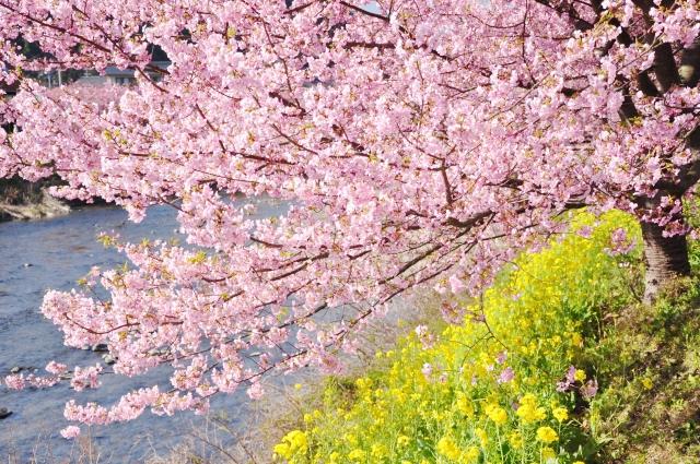 伊豆で桜のロケーション撮影はいかがですか?
